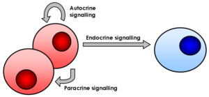 Signaling molecules diagram